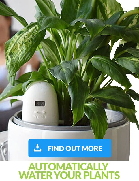 PlantMaid information banner