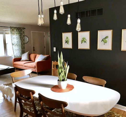 Apartment with Snake Plant