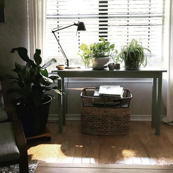 Plants by the window