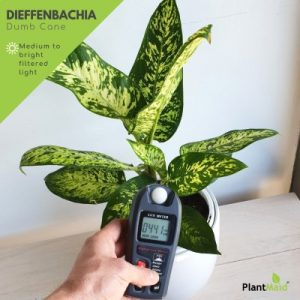 Dumbcane with light meter