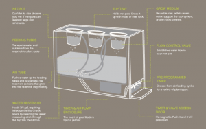 Modern Sprout Hydroponic Chalkboard Diagram