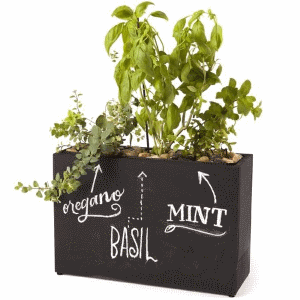 Modern Sprout Hydroponic Chalkboard