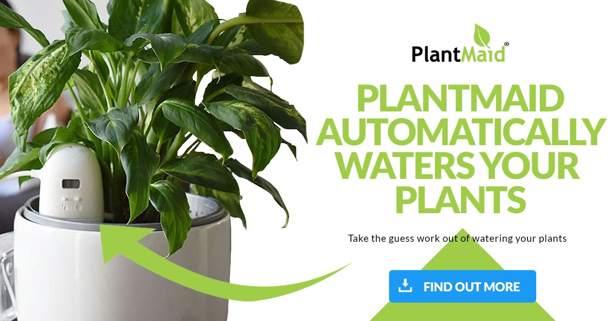 PlantMaid Banner Find Out More