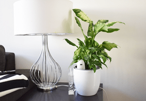 PlantMaid watering plant on sidetable