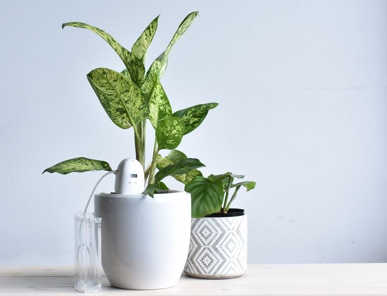 PlantMaid On Table medium