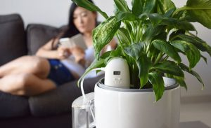 Plantmaid automatically watering a Dieffenbachia while woman rests on the couch