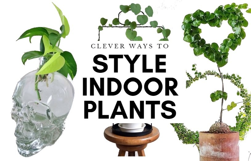 Plant Styling ideas feature image