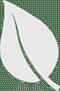 Small Grey leaf
