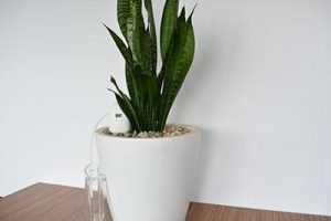 PlantMaid can be set to automatically water the Snake Plant