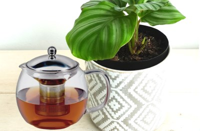Tea and Plant Featured Image