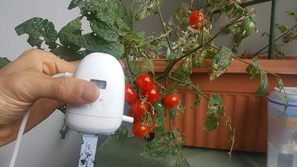 PlantMaid in front of a tomato plant