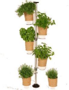Urban Planty