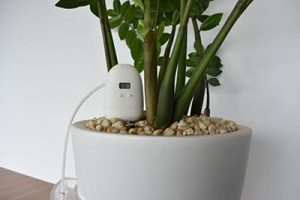 Plantmaid automatically watering the ZZ plant
