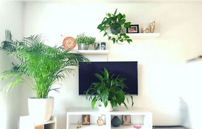 Plants next to TV