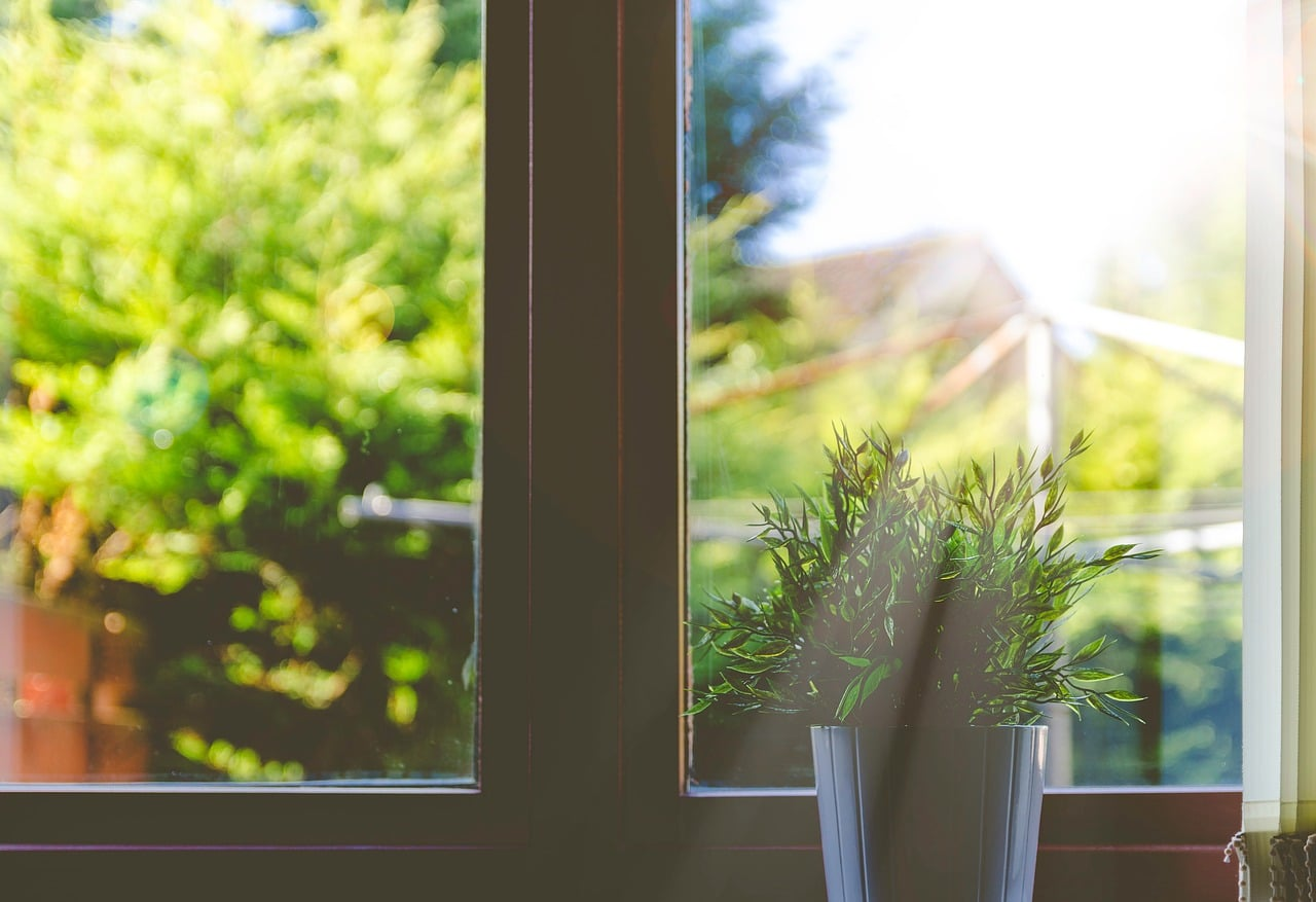 Plant receiving sunlight