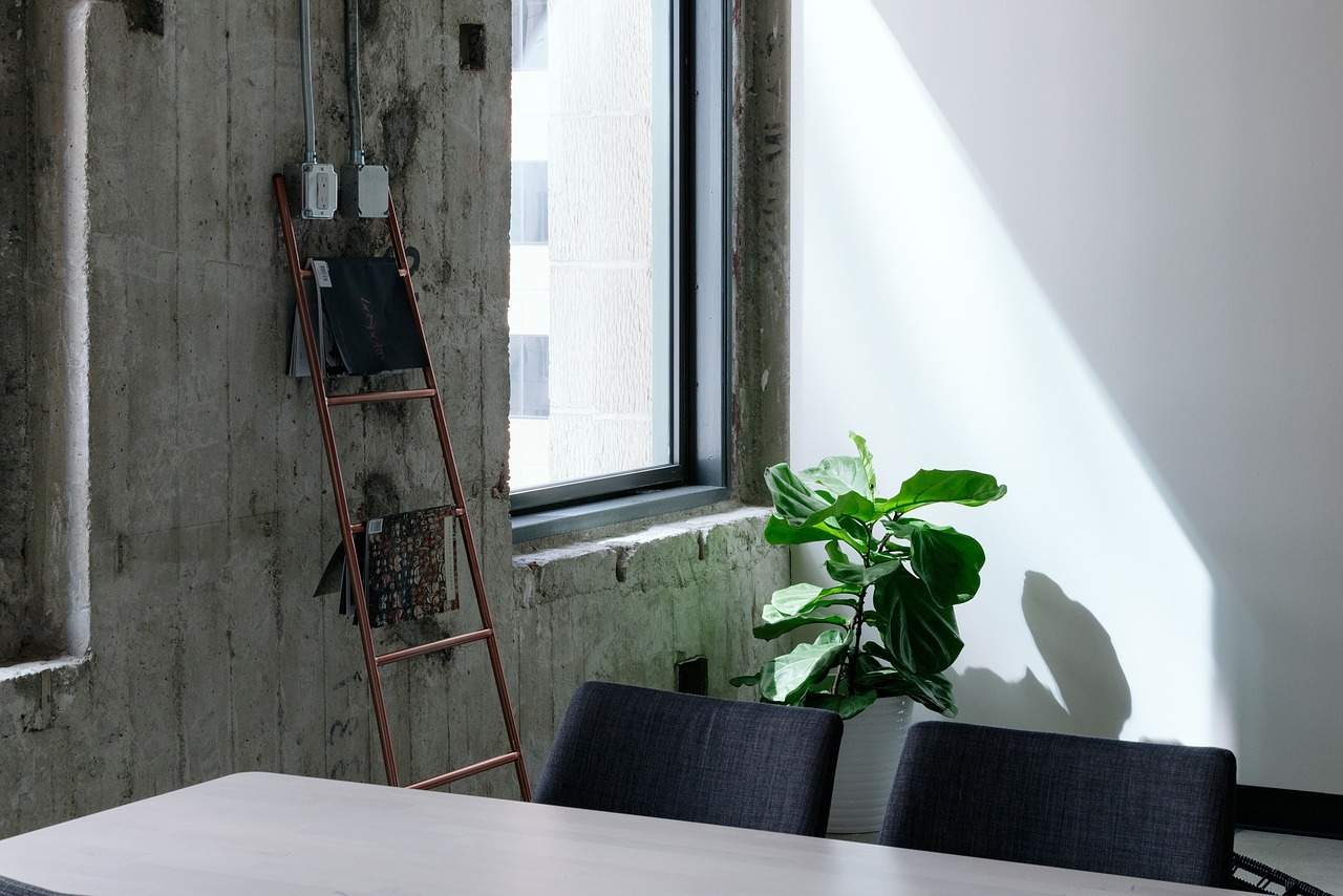 Fiddle leaf fig plant in corner of room