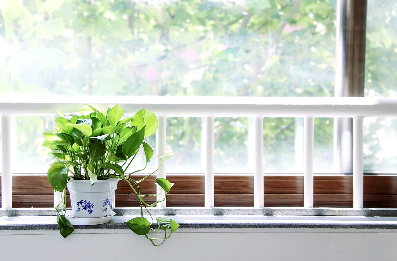 Plant on the window sill
