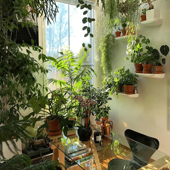 You might have gone overboard with the plants