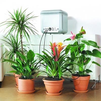 Oasis watering plants