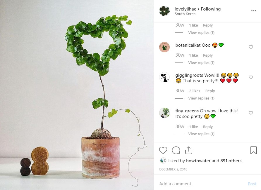 Plant growing around a heart shaped frame