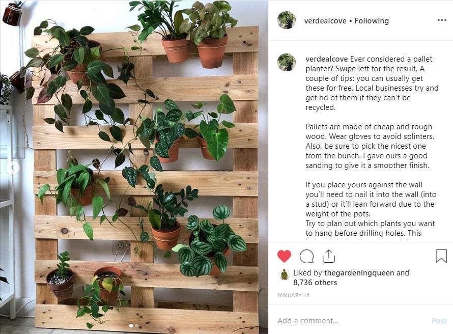 Plants on a wooden palette