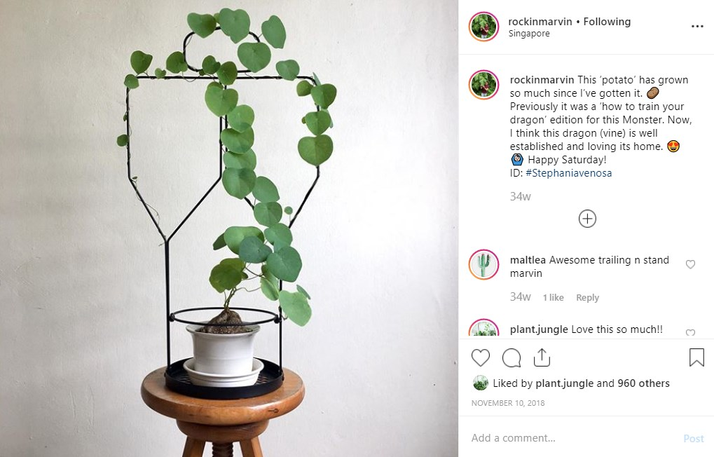 Plant growing around a modern metal frame