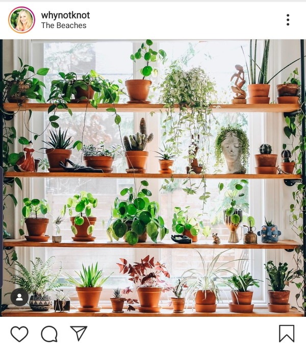 Shelf showing a number of plants