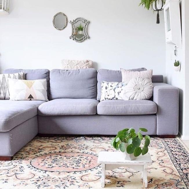 Pilea in living room