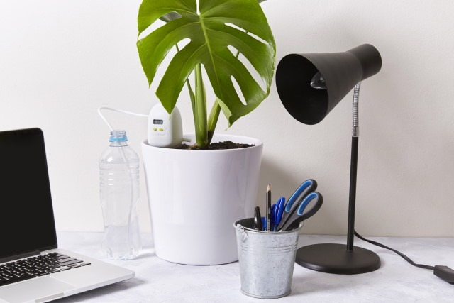 PlantMaid on a desk