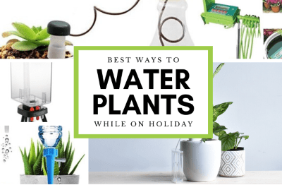 Watering on Holiday featured image